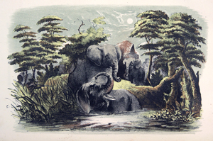 Lithograph from Webber's the Hunter-Naturalist